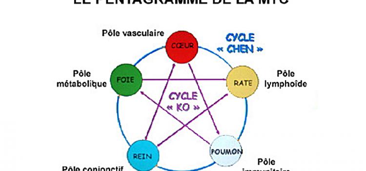 Régulation des organes-éléments